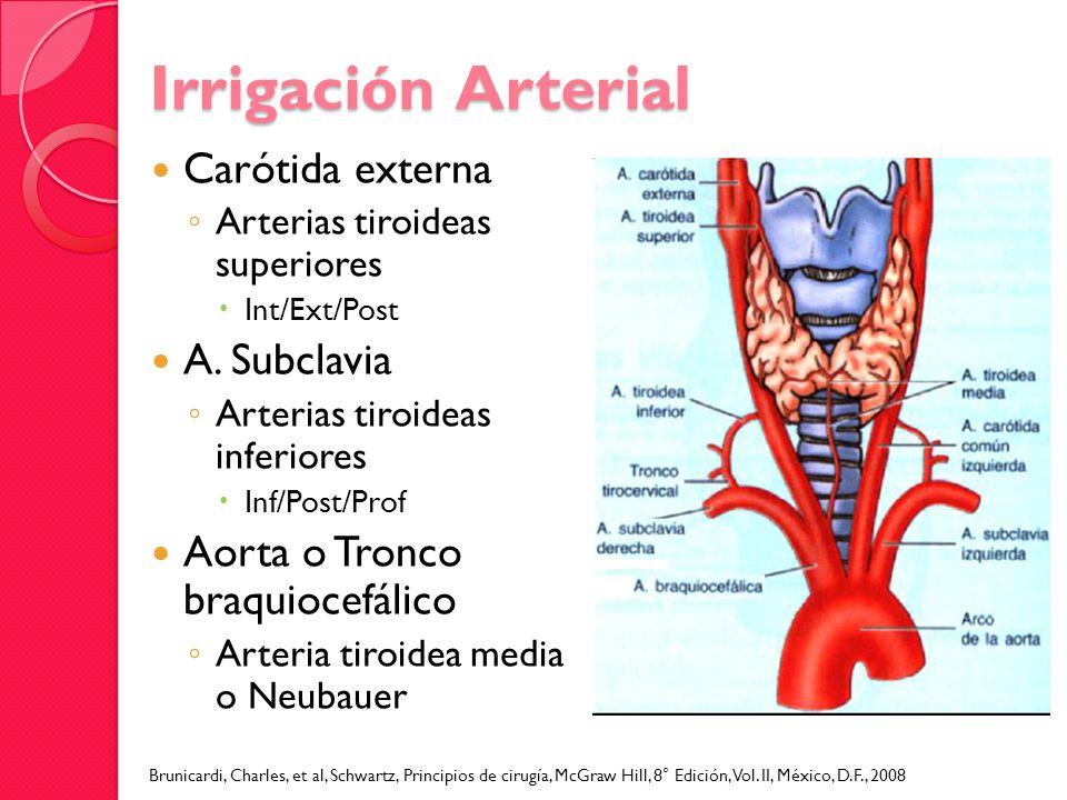 Carótida externa Arterias tiroideas superiores Int/Ext/Post A. Subclavia Arterias tiroideas inferiores Inf/Post/Prof Aorta o Tronco braquiocefálico Ar