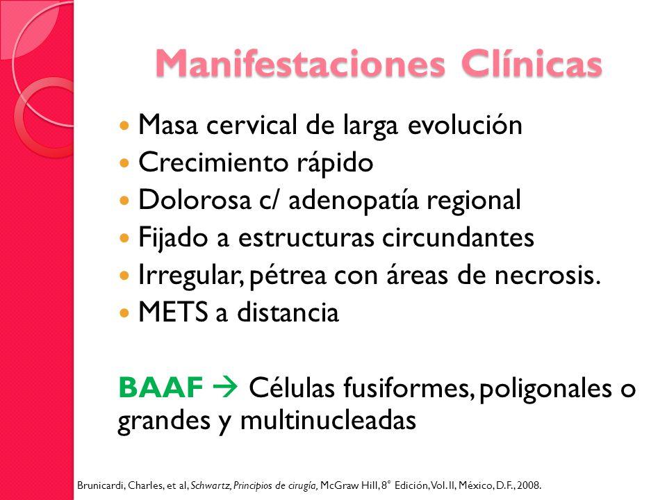 Manifestaciones Clínicas Masa cervical de larga evolución Crecimiento rápido Dolorosa c/ adenopatía regional Fijado a estructuras circundantes Irregul