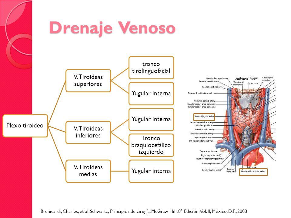 Drenaje Venoso Plexo tiroideo V. Tiroideas superiores tronco tirolinguofacial Yugular interna V. Tiroideas inferiores Yugular interna Tronco braquioce