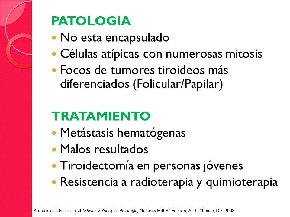 PATOLOGIA No esta encapsulado Células atípicas con numerosas mitosis Focos de tumores tiroideos más diferenciados (Folicular/Papilar) TRATAMIENTO Metá