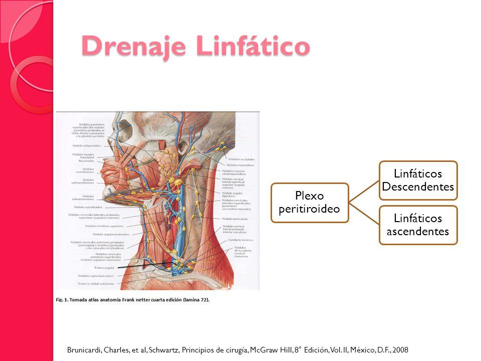 Drenaje Linfático Plexo peritiroideo Linfáticos Descendentes Linfáticos ascendentes Brunicardi, Charles, et al, Schwartz, Principios de cirugía, McGra