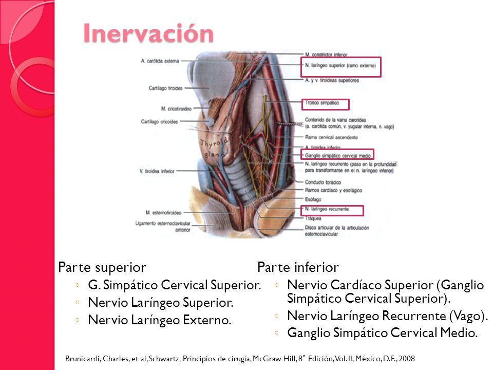 Inervación Parte superior G. Simpático Cervical Superior. Nervio Laríngeo Superior. Nervio Laríngeo Externo. Parte inferior Nervio Cardíaco Superior (