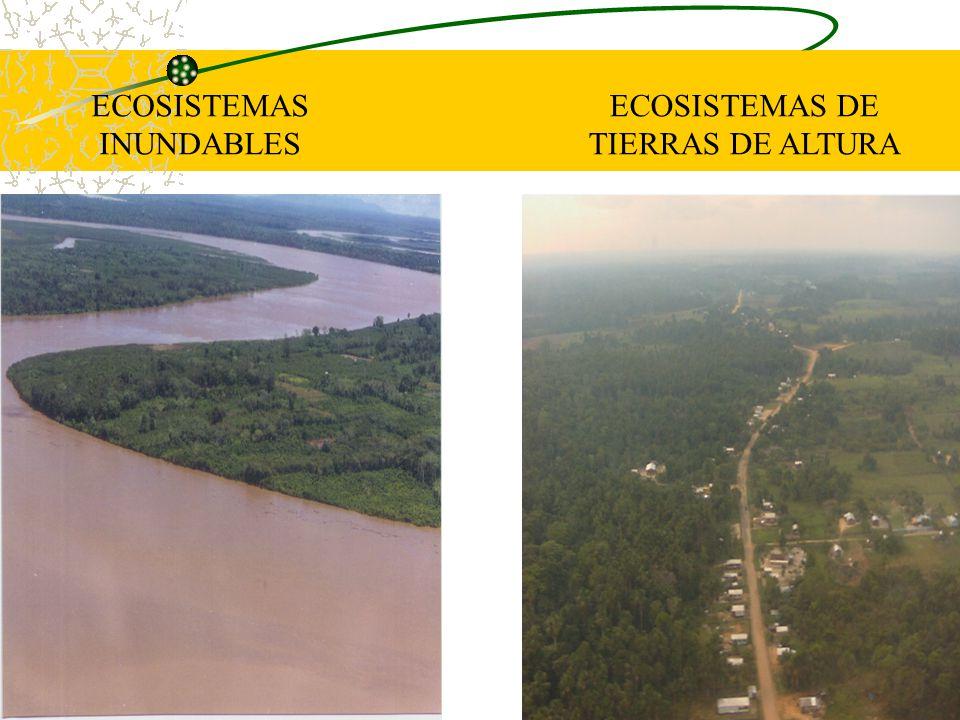 iiap BIODAMAZ Peru - Finlandia ECOSISTEMAS INUNDABLES ECOSISTEMAS DE TIERRAS DE ALTURA
