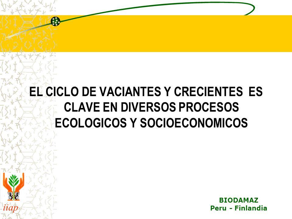 iiap BIODAMAZ Peru - Finlandia EL CICLO DE VACIANTES Y CRECIENTES ES CLAVE EN DIVERSOS PROCESOS ECOLOGICOS Y SOCIOECONOMICOS
