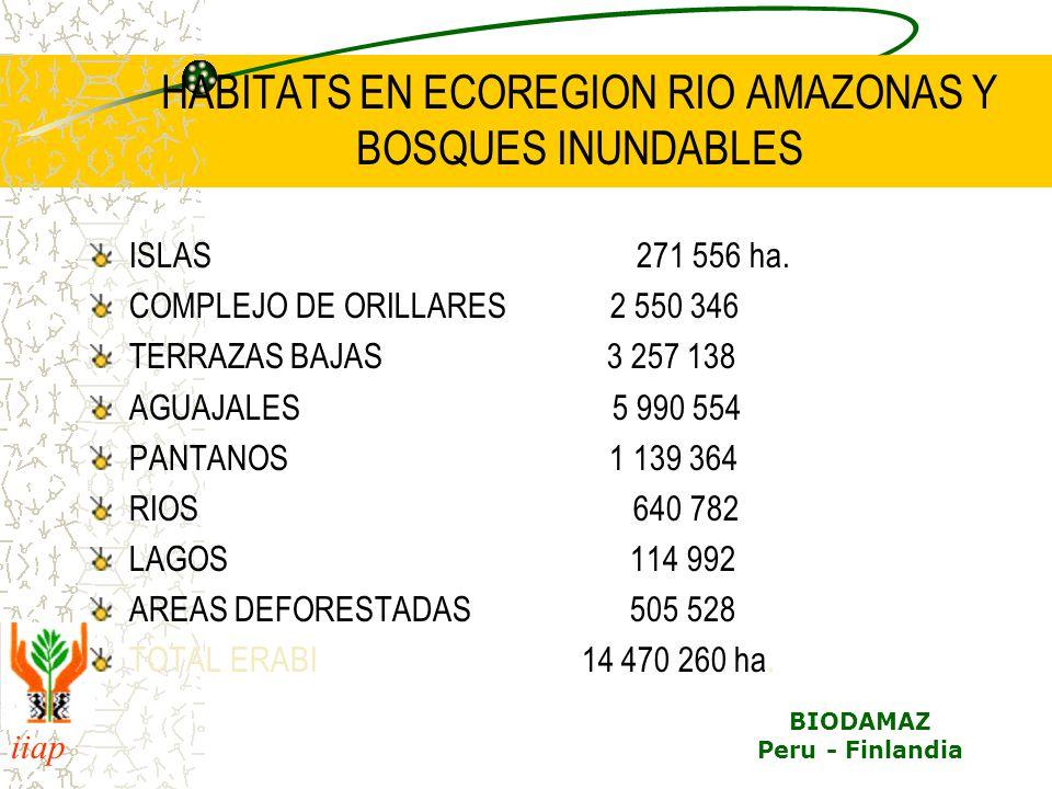 iiap BIODAMAZ Peru - Finlandia HABITATS EN ECOREGION RIO AMAZONAS Y BOSQUES INUNDABLES ISLAS 271 556 ha. COMPLEJO DE ORILLARES 2 550 346 TERRAZAS BAJA