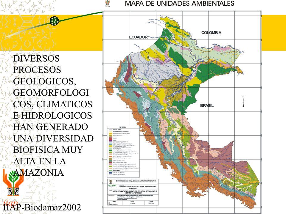 iiap BIODAMAZ Peru - Finlandia IIAP-Biodamaz2002 DIVERSOS PROCESOS GEOLOGICOS, GEOMORFOLOGI COS, CLIMATICOS E HIDROLOGICOS HAN GENERADO UNA DIVERSIDAD BIOFISICA MUY ALTA EN LA AMAZONIA