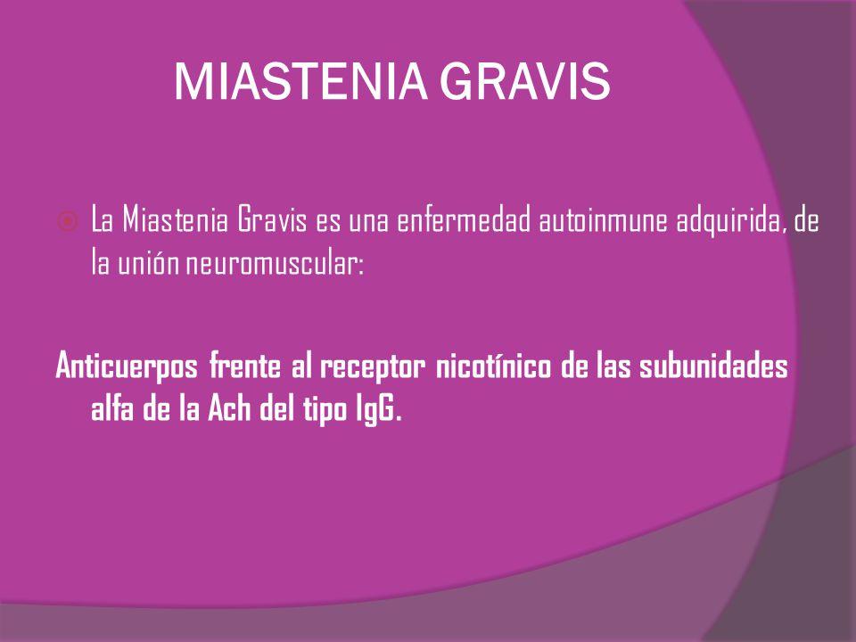 MIASTENIA GRAVIS La Miastenia Gravis es una enfermedad autoinmune adquirida, de la unión neuromuscular: Anticuerpos frente al receptor nicotínico de l