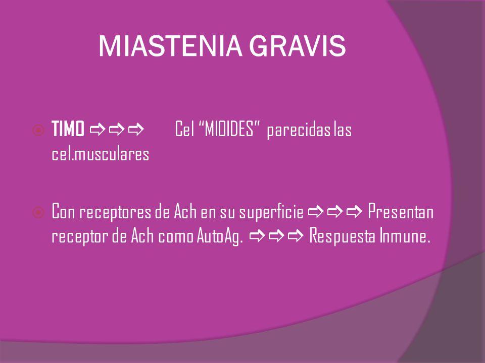 MIASTENIA GRAVIS TIMO Cel MIOIDES parecidas las cel.musculares Con receptores de Ach en su superficie Presentan receptor de Ach como AutoAg. Respuesta