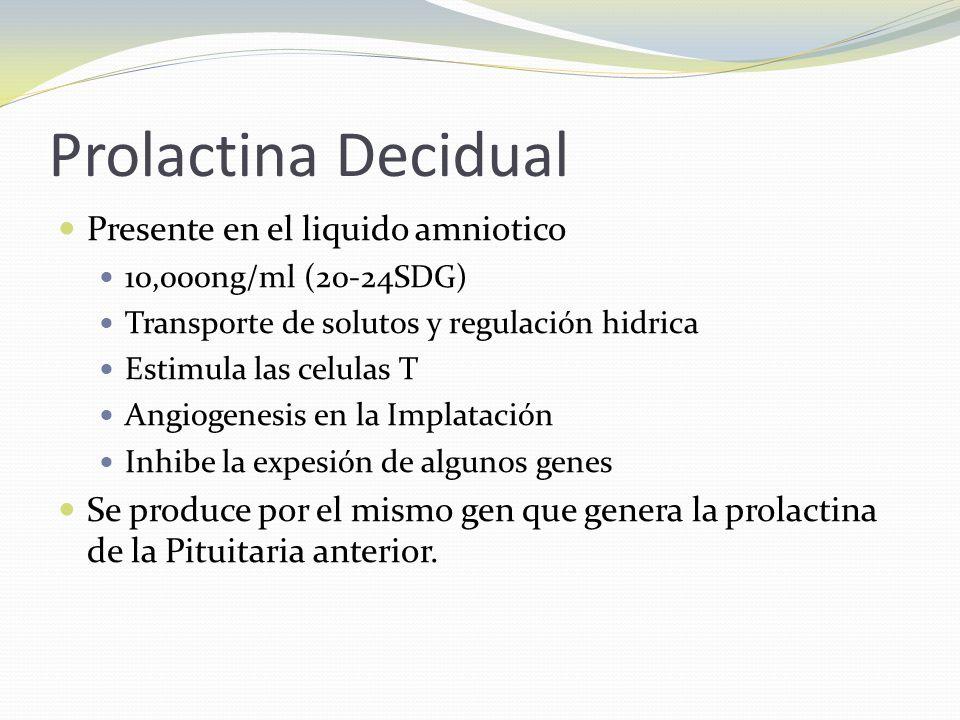 Prolactina Decidual Presente en el liquido amniotico 10,000ng/ml (20-24SDG) Transporte de solutos y regulación hidrica Estimula las celulas T Angiogen