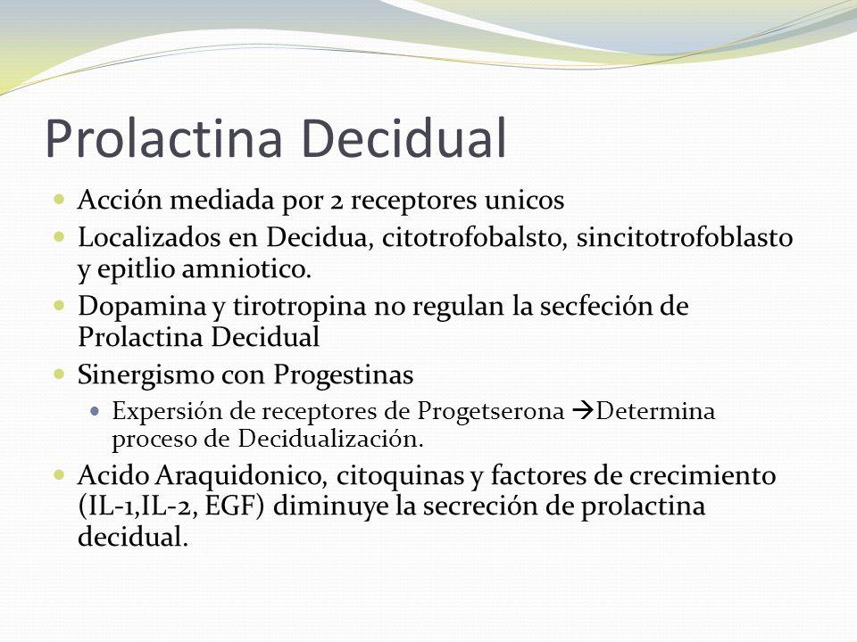 Prolactina Decidual Acción mediada por 2 receptores unicos Localizados en Decidua, citotrofobalsto, sincitotrofoblasto y epitlio amniotico. Dopamina y