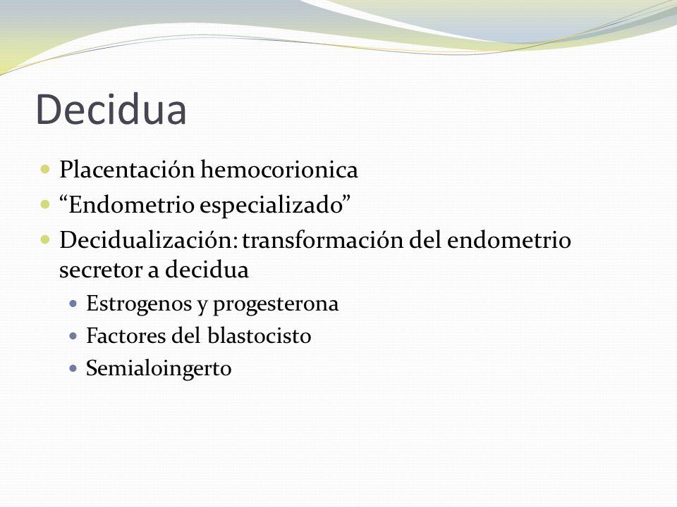 Decidua Placentación hemocorionica Endometrio especializado Decidualización: transformación del endometrio secretor a decidua Estrogenos y progesteron