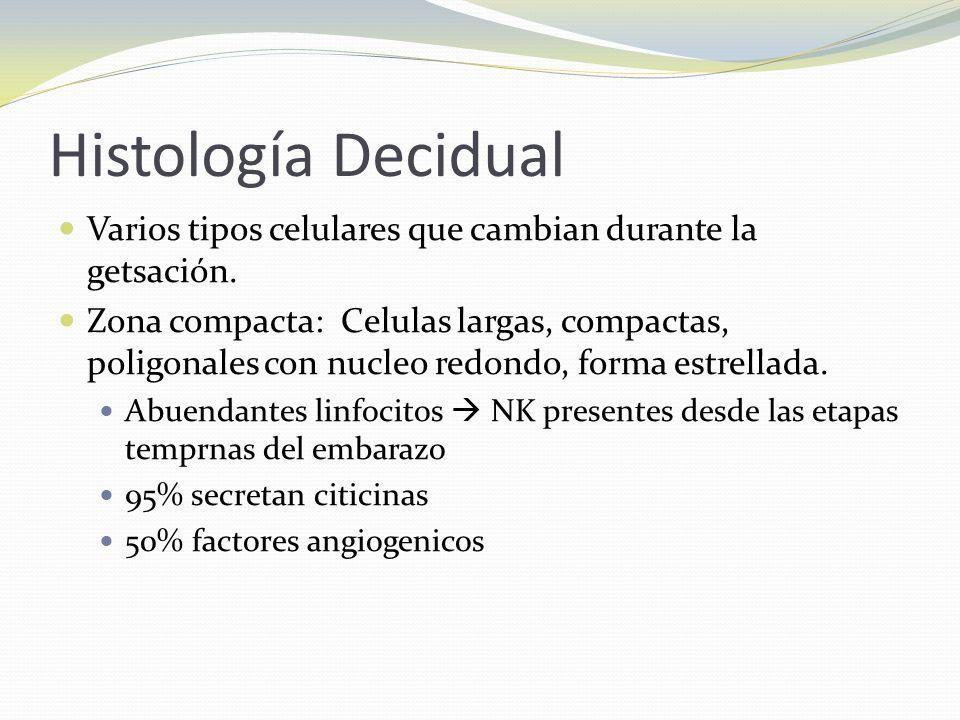 Histología Decidual Varios tipos celulares que cambian durante la getsación. Zona compacta: Celulas largas, compactas, poligonales con nucleo redondo,