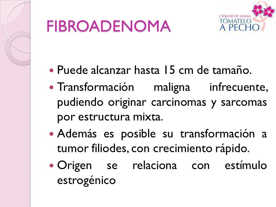 FIBROADENOMA Puede alcanzar hasta 15 cm de tamaño. Transformación maligna infrecuente, pudiendo originar carcinomas y sarcomas por estructura mixta. A