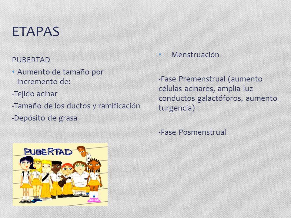 ETAPAS PUBERTAD Aumento de tamaño por incremento de: -Tejido acinar -Tamaño de los ductos y ramificación -Depósito de grasa Menstruación -Fase Premens