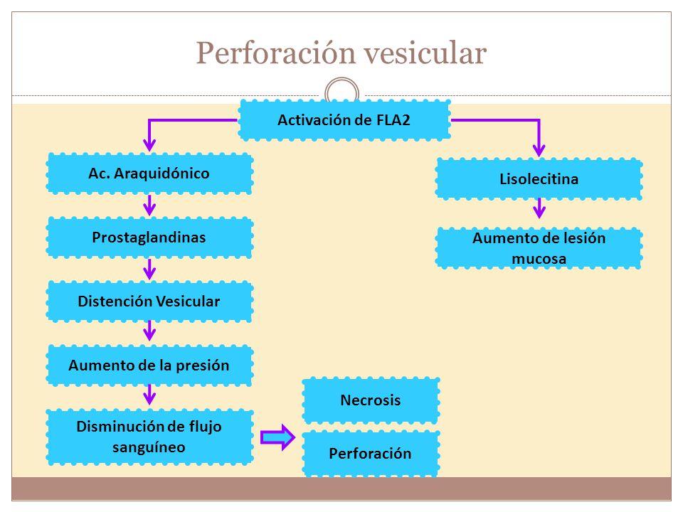 Activación de FLA2 Ac. Araquidónico Lisolecitina Aumento de lesión mucosa Prostaglandinas Distención Vesicular Aumento de la presión Disminución de fl