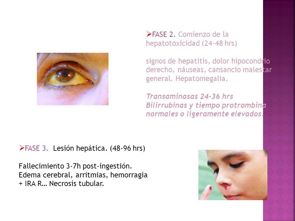 FASE 3. Lesión hepática. (48-96 hrs) Fallecimiento 3-7h post-ingestión. Edema cerebral, arritmias, hemorragia + IRA R… Necrosis tubular. FASE 2. Comie