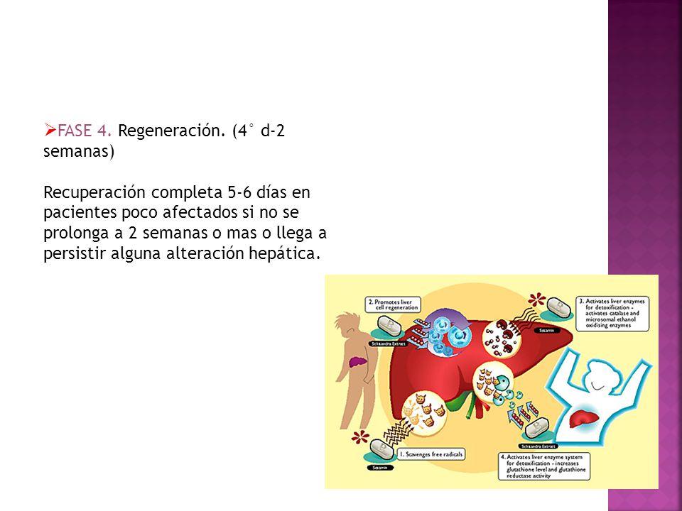 FASE 4. Regeneración. (4° d-2 semanas) Recuperación completa 5-6 días en pacientes poco afectados si no se prolonga a 2 semanas o mas o llega a persis
