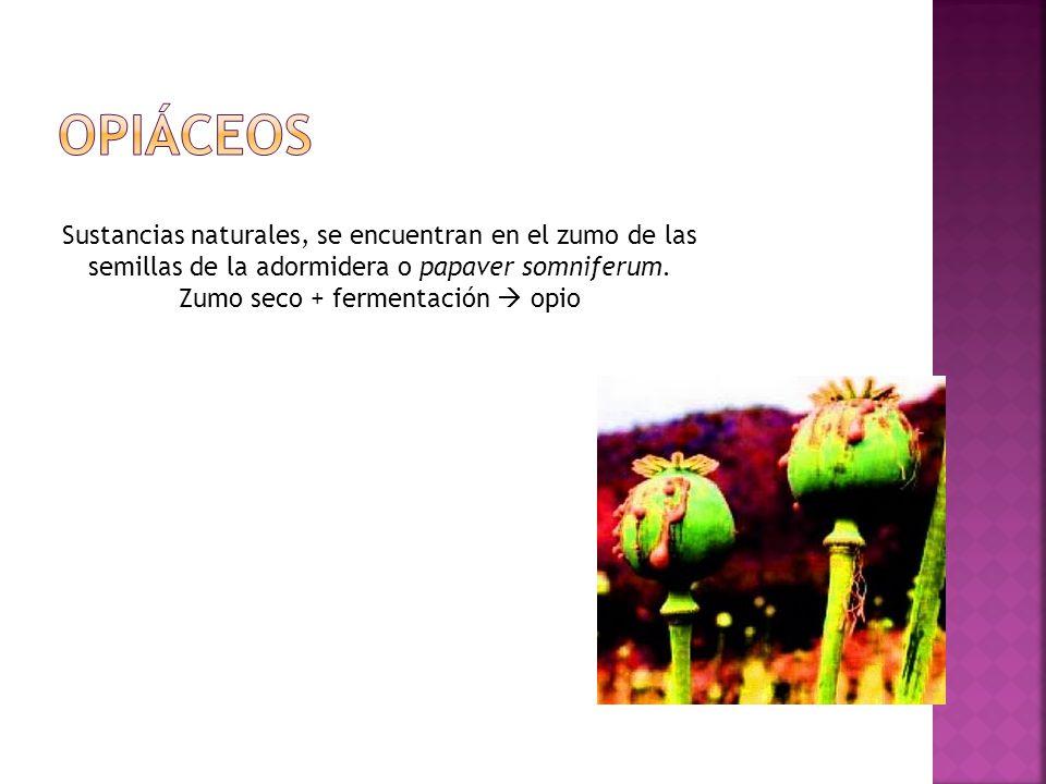 Sustancias naturales, se encuentran en el zumo de las semillas de la adormidera o papaver somniferum. Zumo seco + fermentación opio