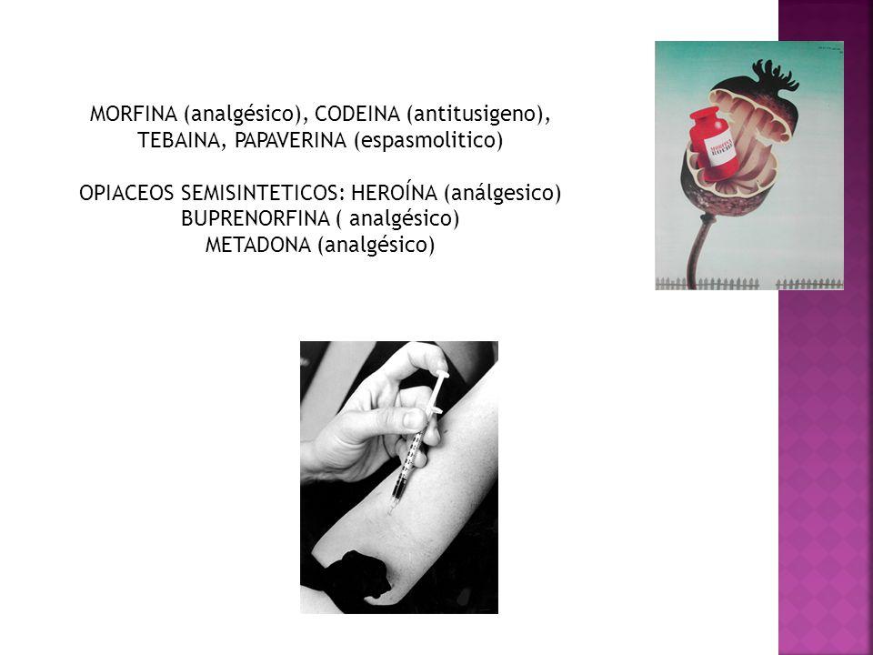 MORFINA (analgésico), CODEINA (antitusigeno), TEBAINA, PAPAVERINA (espasmolitico) OPIACEOS SEMISINTETICOS: HEROÍNA (análgesico) BUPRENORFINA ( analgés