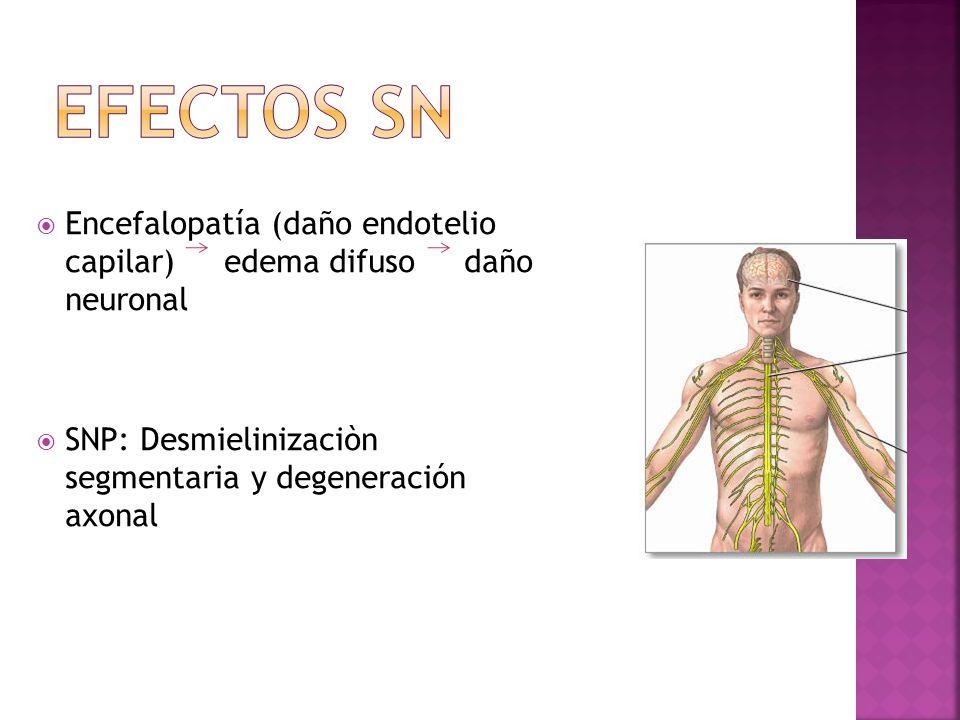 Encefalopatía (daño endotelio capilar) edema difuso daño neuronal SNP: Desmielinizaciòn segmentaria y degeneración axonal