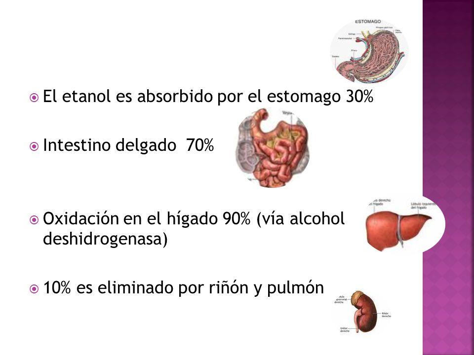 El etanol es absorbido por el estomago 30% Intestino delgado 70% Oxidación en el hígado 90% (vía alcohol deshidrogenasa) 10% es eliminado por riñón y