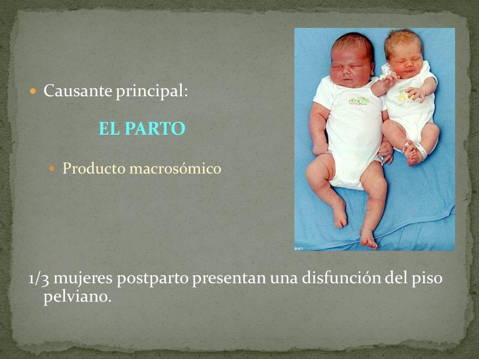 Causante principal: EL PARTO Producto macrosómico 1/3 mujeres postparto presentan una disfunción del piso pelviano.