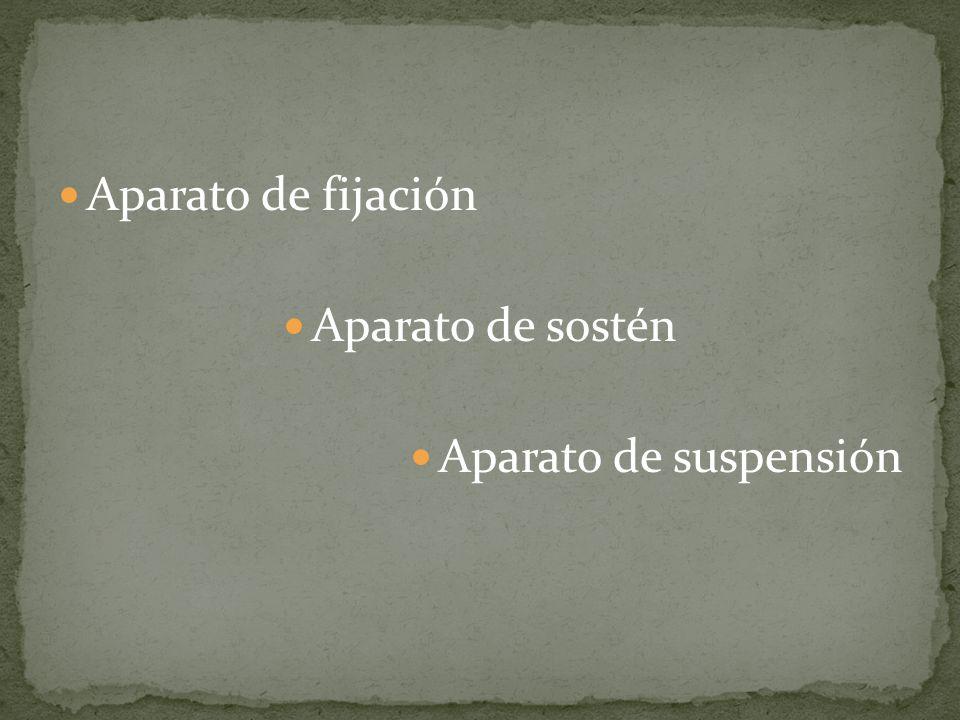La relajación pélvica incluye: Uretrocele Cistocele Prolapso uterino Prolapso de cúpula vaginal Enterocele Rectocele Relajación del orificio vaginal