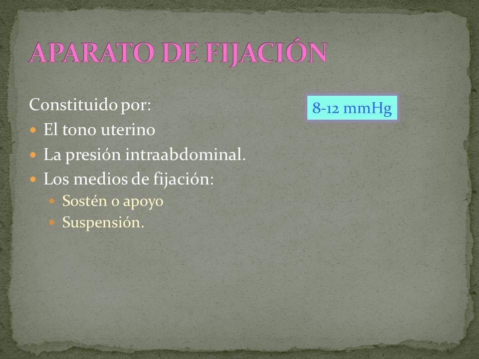 Constituido por: El tono uterino La presión intraabdominal. Los medios de fijación: Sostén o apoyo Suspensión. 8-12 mmHg