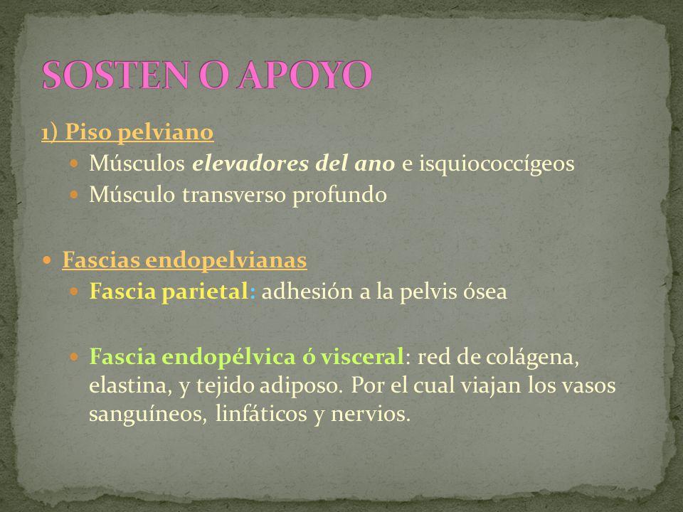 1) Piso pelviano Músculos elevadores del ano e isquiococcígeos Músculo transverso profundo Fascias endopelvianas Fascia parietal: adhesión a la pelvis