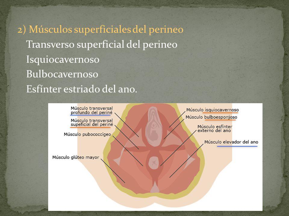 2) Pérdida de la función del elevador: Daño neuromuscular durante el parto.