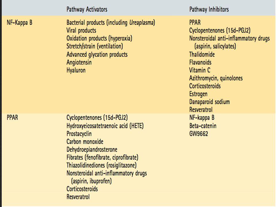 Patología Neumonía Lobar 1.Congestión: 24 hrs.