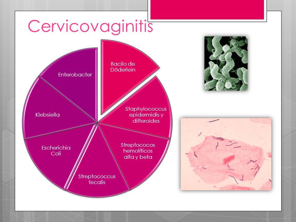 Cervicovaginitis Bacilo de Döderlein Staphylococcus epidermidis y difteroides Streptococos hemolíticos alfa y beta Streptococcus fecalis Escherichia C