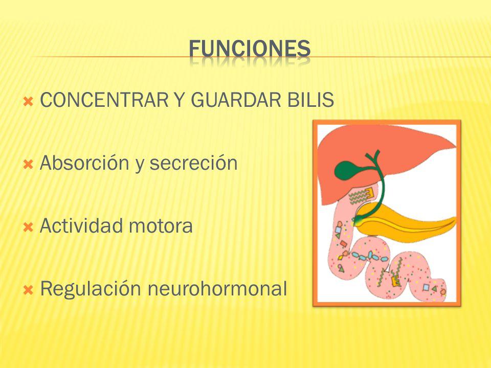 CONCENTRAR Y GUARDAR BILIS Absorción y secreción Actividad motora Regulación neurohormonal