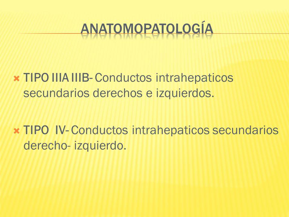 TIPO IIIA IIIB- Conductos intrahepaticos secundarios derechos e izquierdos. TIPO IV- Conductos intrahepaticos secundarios derecho- izquierdo.