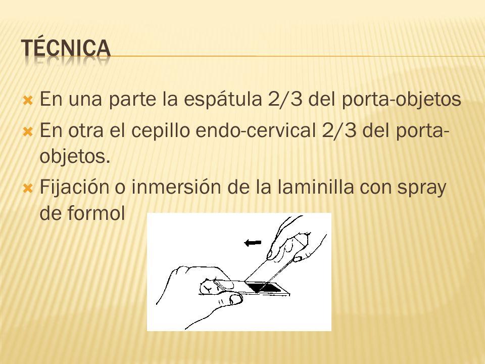 En una parte la espátula 2/3 del porta-objetos En otra el cepillo endo-cervical 2/3 del porta- objetos. Fijación o inmersión de la laminilla con spray