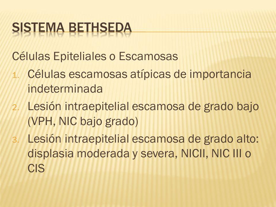 Células Epiteliales o Escamosas 1. Células escamosas atípicas de importancia indeterminada 2. Lesión intraepitelial escamosa de grado bajo (VPH, NIC b