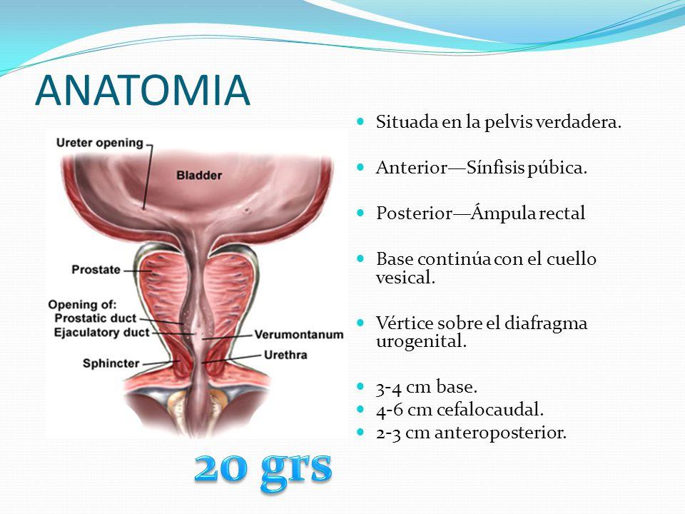 Cistoscopia Se obtiene información sobre trastornos en uretra, próstata, cuello vesical y vejiga.