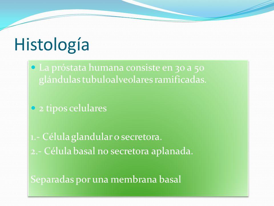 Histología La próstata humana consiste en 30 a 50 glándulas tubuloalveolares ramificadas. 2 tipos celulares 1.- Célula glandular o secretora. 2.- Célu