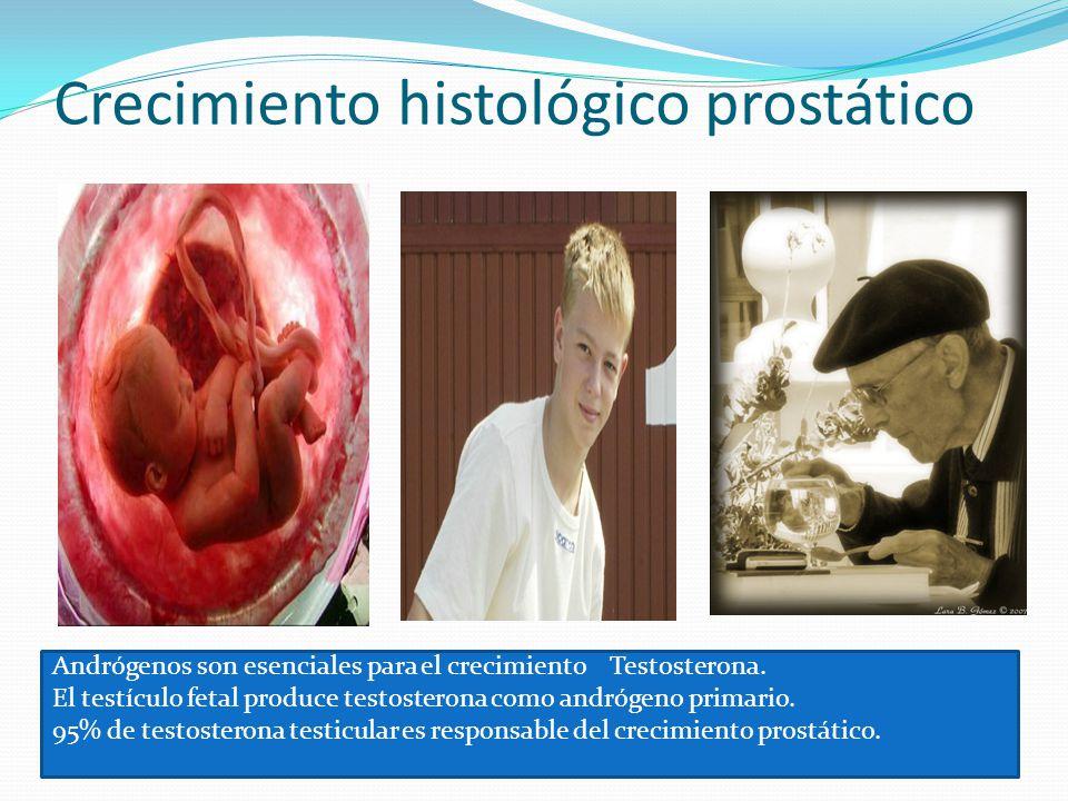 Crecimiento histológico prostático Andrógenos son esenciales para el crecimiento Testosterona. El testículo fetal produce testosterona como andrógeno