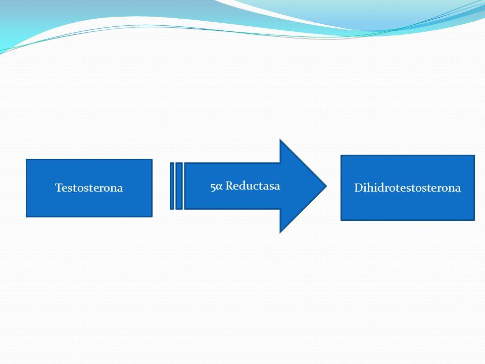 5α Reductasa Testosterona Dihidrotestosterona