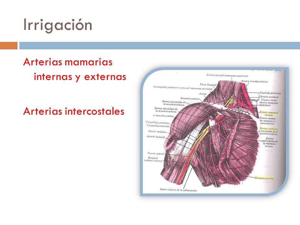 Arterias mamarias internas y externas Arterias intercostales Irrigación
