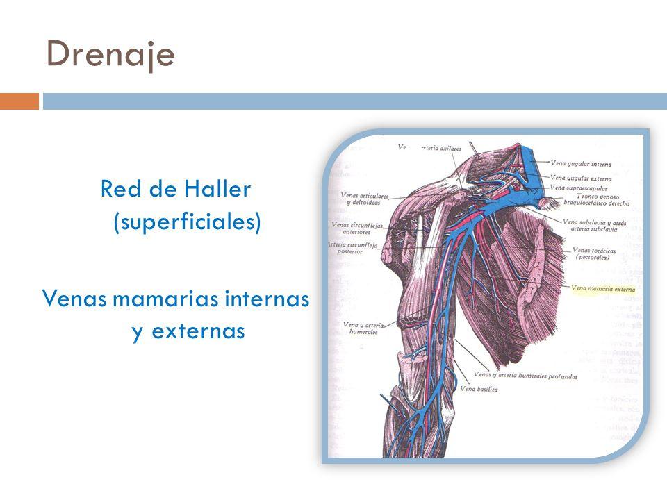Drenaje Red de Haller (superficiales) Venas mamarias internas y externas