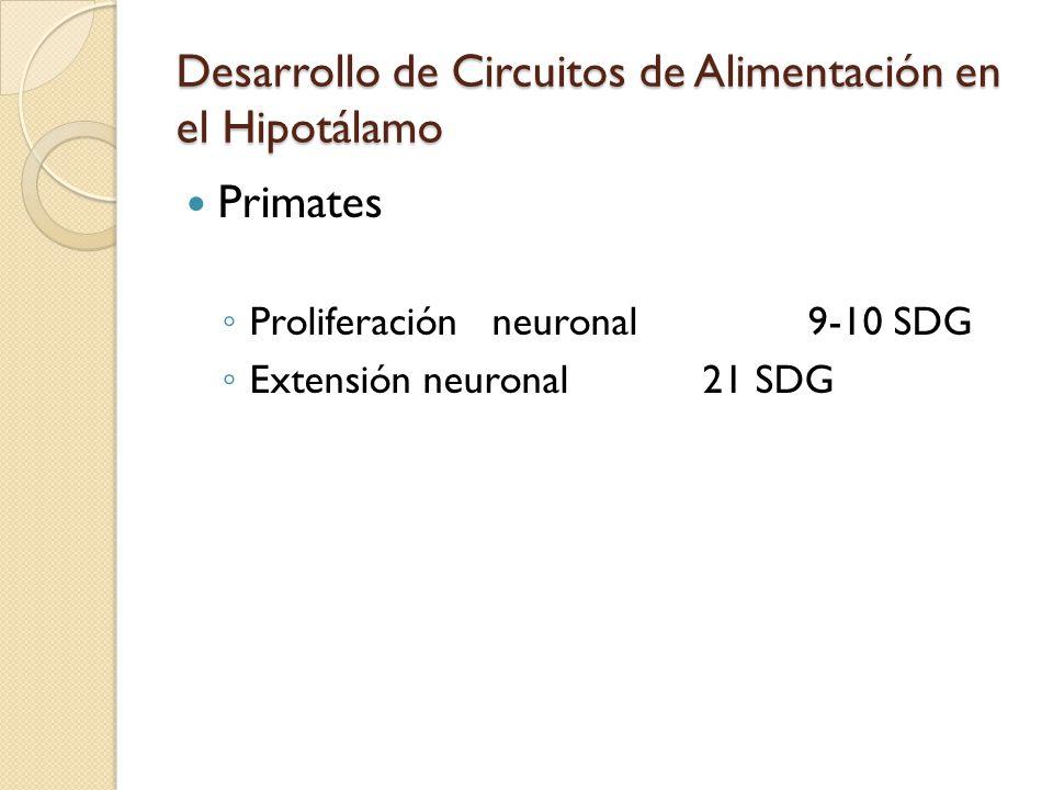 Desarrollo de Circuitos de Alimentación en el Hipotálamo Primates Proliferaciónneuronal9-10 SDG Extensión neuronal21 SDG