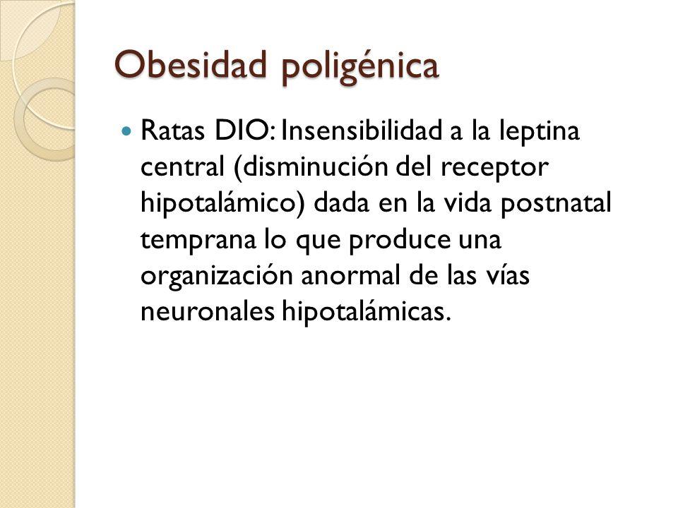 Obesidad poligénica Ratas DIO: Insensibilidad a la leptina central (disminución del receptor hipotalámico) dada en la vida postnatal temprana lo que p