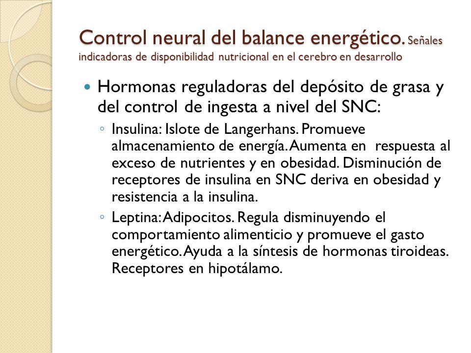 Control neural del balance energético. Señales indicadoras de disponibilidad nutricional en el cerebro en desarrollo Hormonas reguladoras del depósito