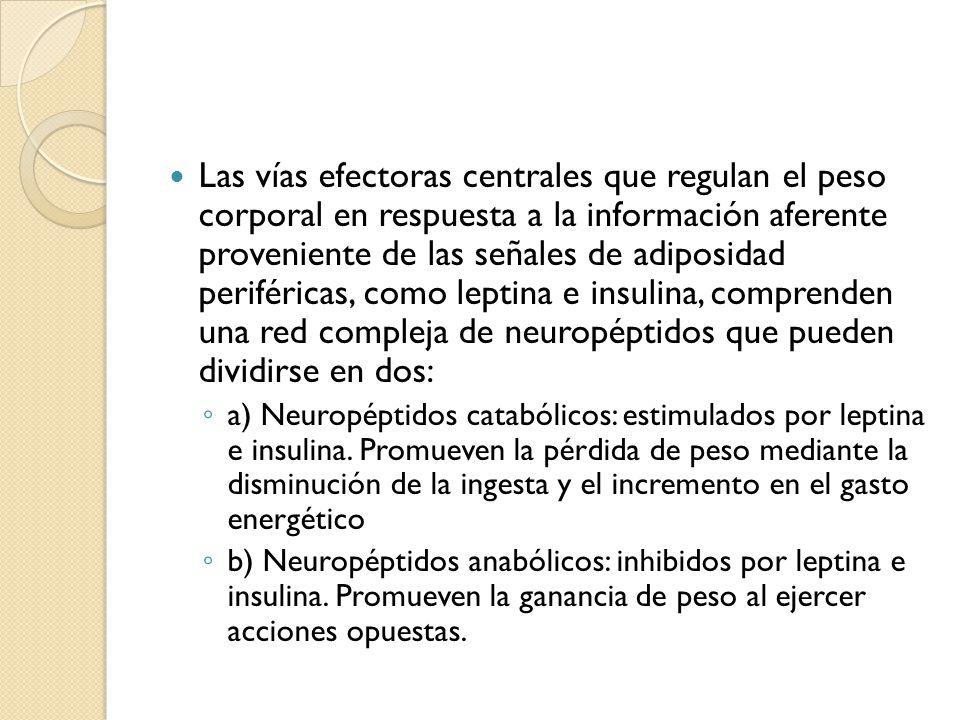 Las vías efectoras centrales que regulan el peso corporal en respuesta a la información aferente proveniente de las señales de adiposidad periféricas,