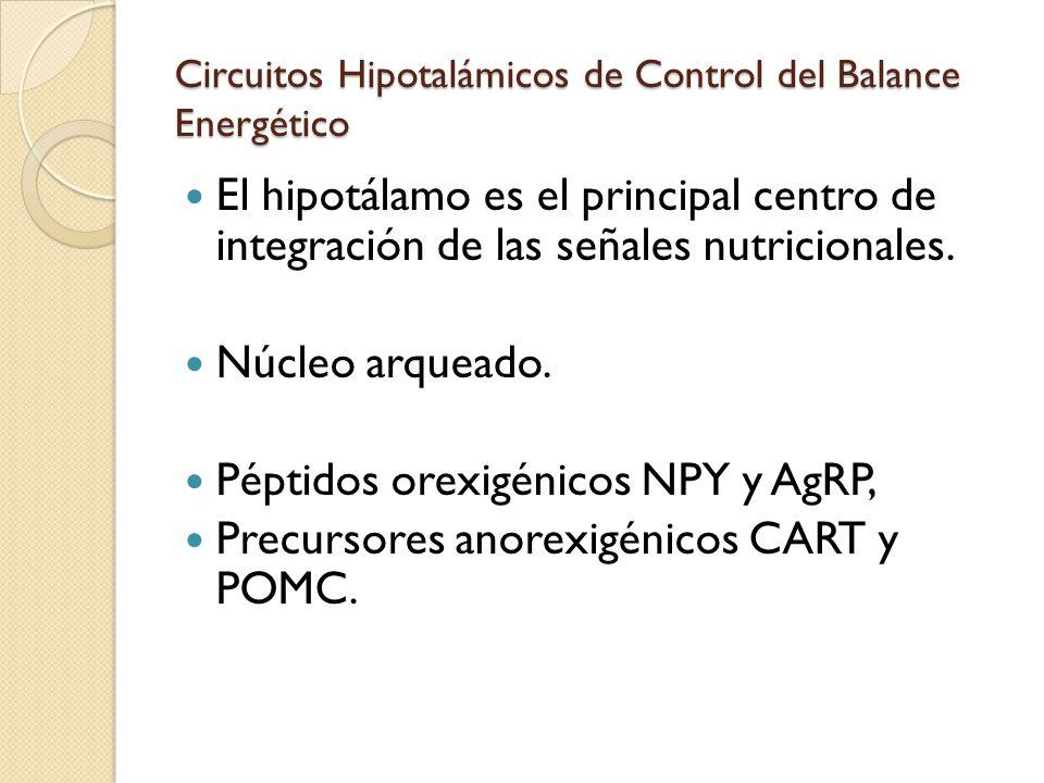 Circuitos Hipotalámicos de Control del Balance Energético El hipotálamo es el principal centro de integración de las señales nutricionales. Núcleo arq