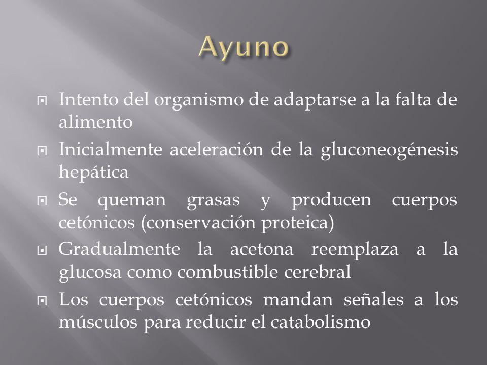 Intento del organismo de adaptarse a la falta de alimento Inicialmente aceleración de la gluconeogénesis hepática Se queman grasas y producen cuerpos
