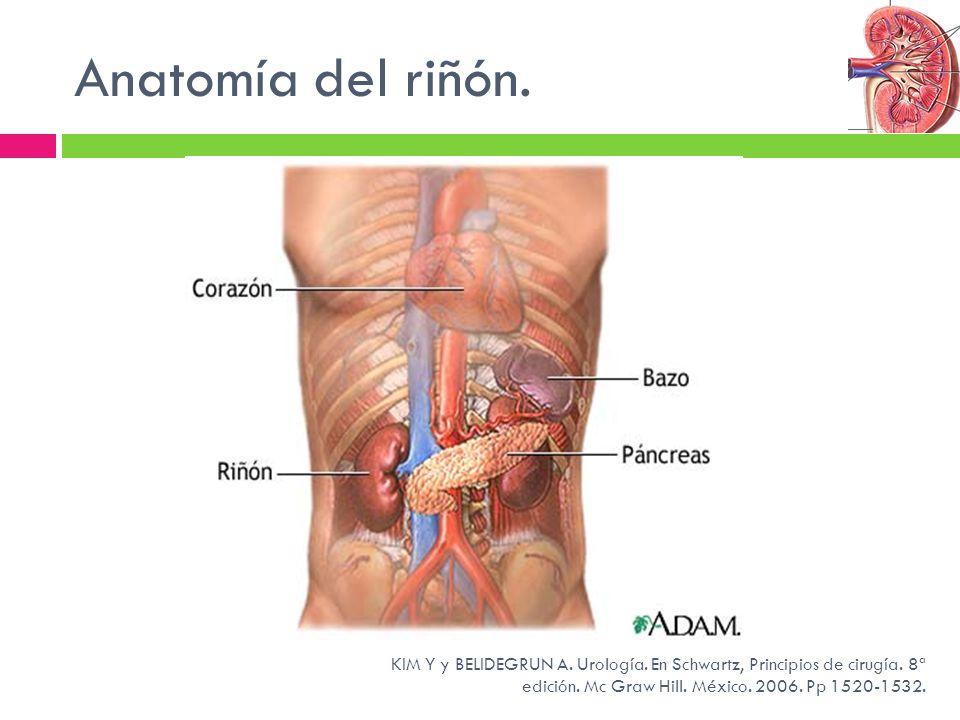 Anatomía del riñón. KIM Y y BELIDEGRUN A. Urología. En Schwartz, Principios de cirugía. 8ª edición. Mc Graw Hill. México. 2006. Pp 1520-1532.