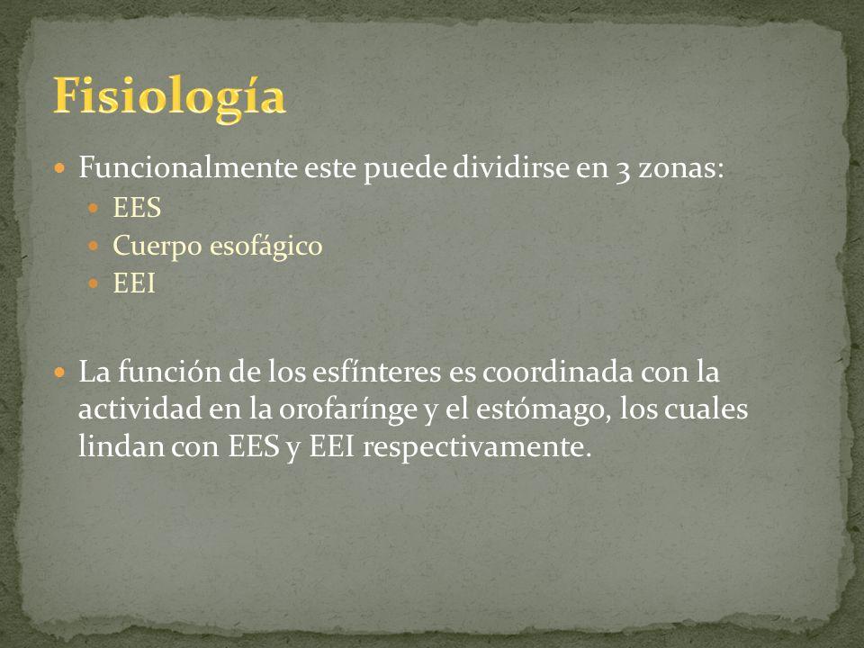 Funcionalmente este puede dividirse en 3 zonas: EES Cuerpo esofágico EEI La función de los esfínteres es coordinada con la actividad en la orofarínge